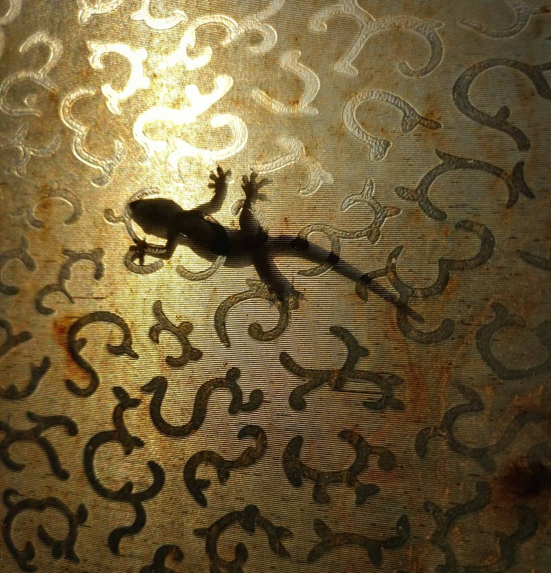 Gecko on Window