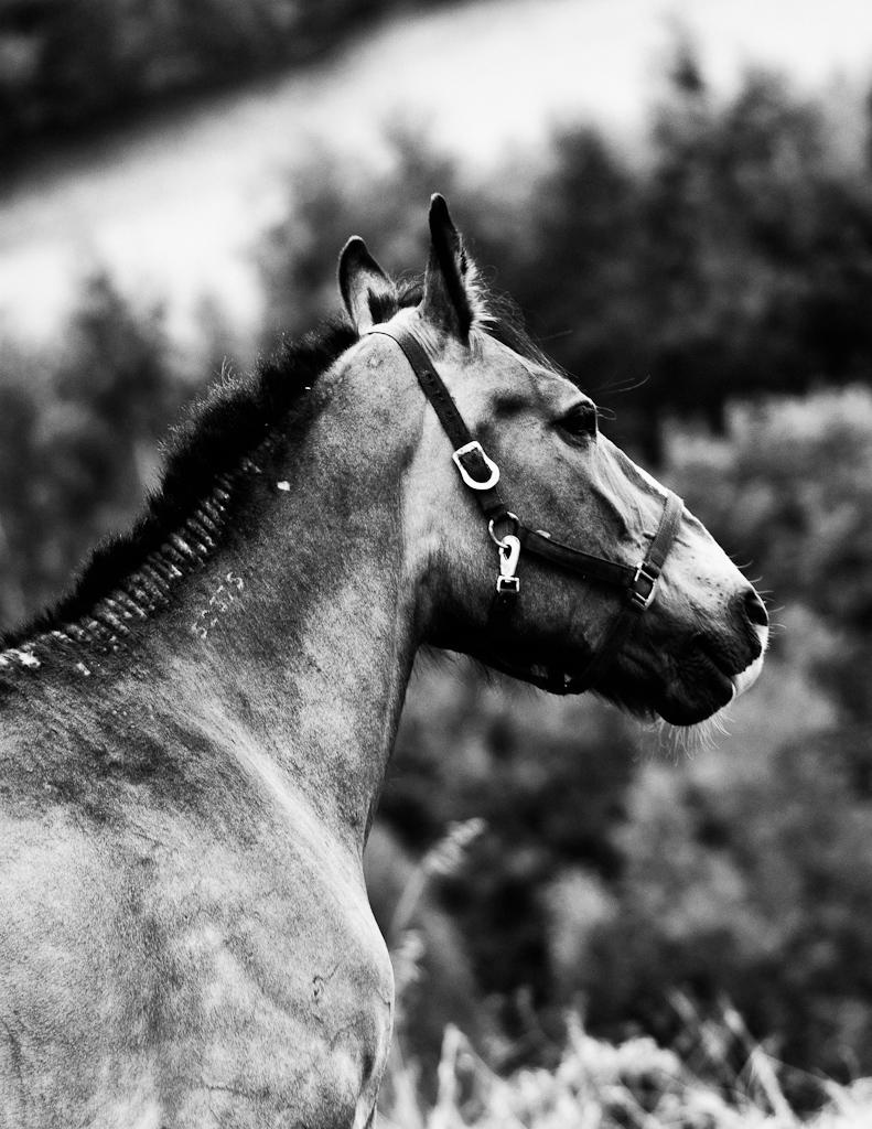 Horse 52375