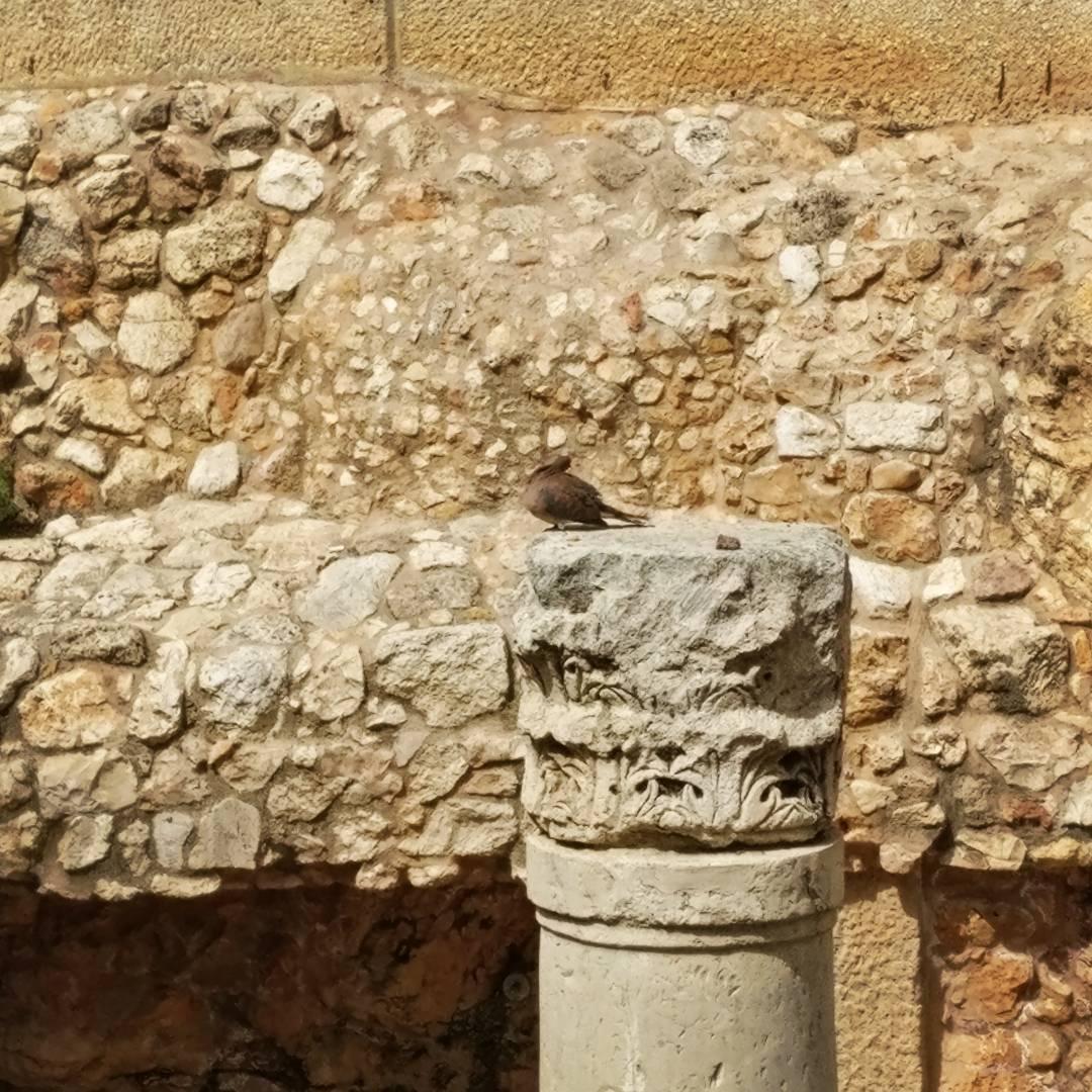 Pigeon on Pillar